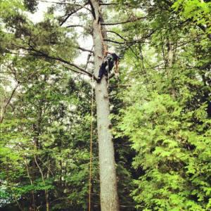 up-pine2
